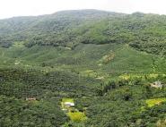 Un nouvel outil pour identifier les causes de la déforestation tropicale